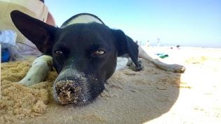 beach moliets